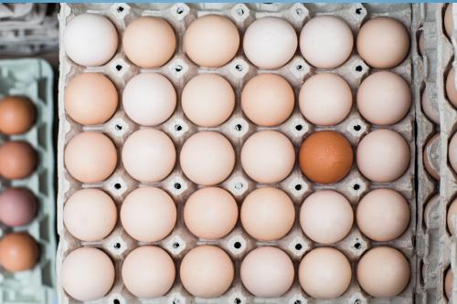 Dystrybucja jaj klatokowe, eko, ściolkowe